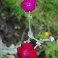 Как называется цветочек?