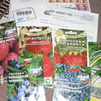 """Приз - семена от фирмы """"БЕККЕР ЛТД"""" пришли по почте"""