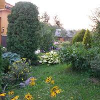 Хосты с весны до осени - украшение любого сада. Или... как бы я сейчас хосту выбирала