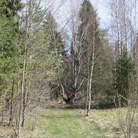 """Как в весенний лес зайти и клеща не """"поймать"""""""