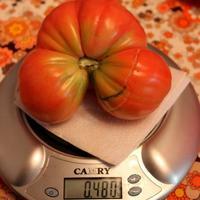 Вкусные помидоры в зоне «рискованного земледелия» без лишних хлопот