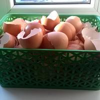Подскажите, пожалуйста, какие именно культуры любят подкормку из яичной скорлупы?