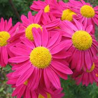 20 цветочных многолетников крупным планом