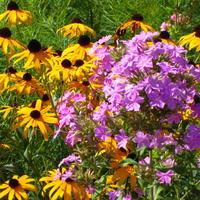 Народные избранники: 10 многолетников из провинциальных цветников