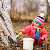 Садовый вар и известка — главные защитники стволов плодовых деревьев
