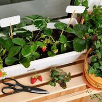Приглашаем всех желающих в Школу домашнего огорода!