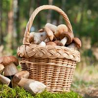Заповеди грибника: как не заблудиться в лесу и вернуться с полной корзиной