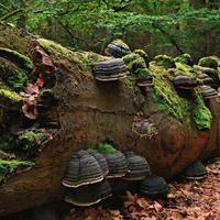 Виды мхов и места их обитания