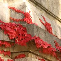 Сезонные работы в саду и огороде: четвёртая неделя октября