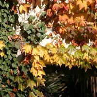 Сезонные работы в саду и огороде: первая неделя ноября