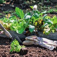 Умный огород: севооборот и подбор «соседей» для ранних овощных культур