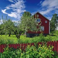 Яблоневый сад: как не ошибиться с выбором саженцев