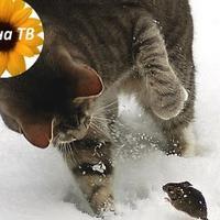 Как избавиться от мышей? Поможет ли в этом кошка?