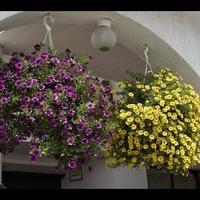 Как ухаживать за растениями в кашпо?