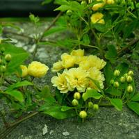 Незнакомые растения Крыма. Часть 1