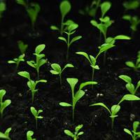 Как продлить срок всхожести семян? Можно ли чем-то стимулировать всхожесть старых семян?