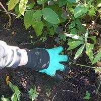 Тестирование перчаток с когтями. Тест: удаление корней многолетних сорняков