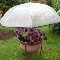 Зонтик для петунии