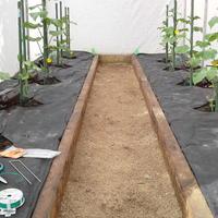Продолжаю наблюдение - как растут мои огурчики в тестируемой теплице. Прошла еще одна неделя