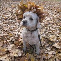 Осень - грибная пора!