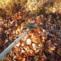 И дубовым листьям найдется применение. Как бесплатно избавиться от сорняков