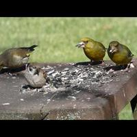 Опять о птичках в саду