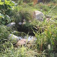 Мини-водоём под водосточной трубой из автомобильной покрышки