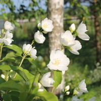 Создаю белый сад