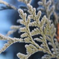 Зимуем и с нетерпением ждём весны!