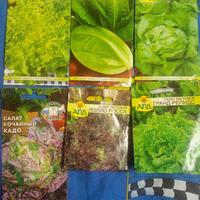 Мое хобби или болезнь)))) №3 - Зелень и травки