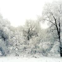 Кругом зимняя сказка