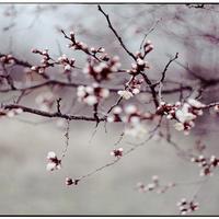 Приветствую тебя, веселая весна!