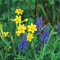 Сине-желтый наряд для весны