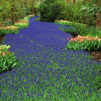 Луковичные чудеса: яркие идеи для весенних цветников