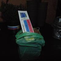Вопросы чайника. Как сохранить посадочный материал из интернет-магазинов до посадки?