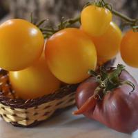 Де Барао оранжевый, или Золотые яйца в моей коллекции томатов
