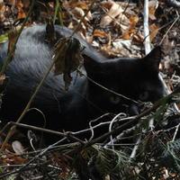 Коты Ботанического сада