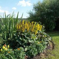 Как сохранить луковичные раннецветущие растения в моем миксбордере?