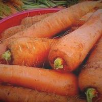 До весны морковь, поверь, сохранится без потерь!