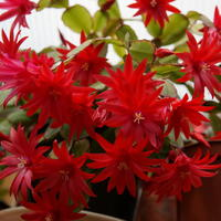 Цветочное хобби