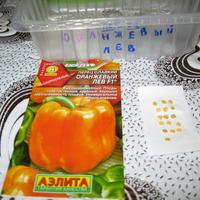 Перец сладкий Оранжевый лев F1 (Аэлита). Тест на всхожесть