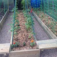 Есть ли разница между поливом томатов на разной стадии роста?