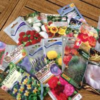 Какие многолетние цветы можно сеять в зиму с последующей пересадкой на постоянное место весной?