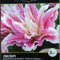 Розовая лилия Natalia - сорт рекомендован настоящим девочкам =))