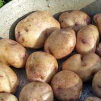 Самый вкусный картофель