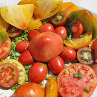 Как дегустировать помидоры