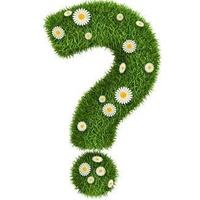 Как на газоне посадить настурцию?
