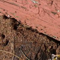 Повышенная активность муравьев. Интересно, к чему такая суета?
