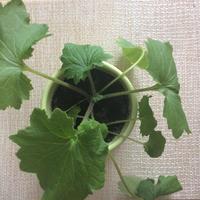 Подскажите название растения и как за ним ухаживать?
