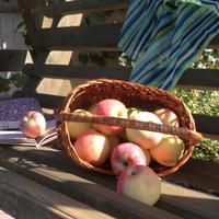 В яблочном раю (готовим из яблок)